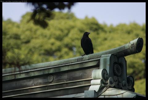 Raven at Meiji Shrine