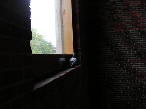 A pigeon sits on a window sill in Quincy Market